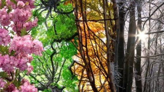 Spring Equinox Vibrational Sound Journey Meditation